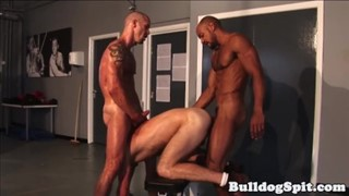 Gay bears in group blowjobs